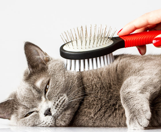 cat brushed with pet brush