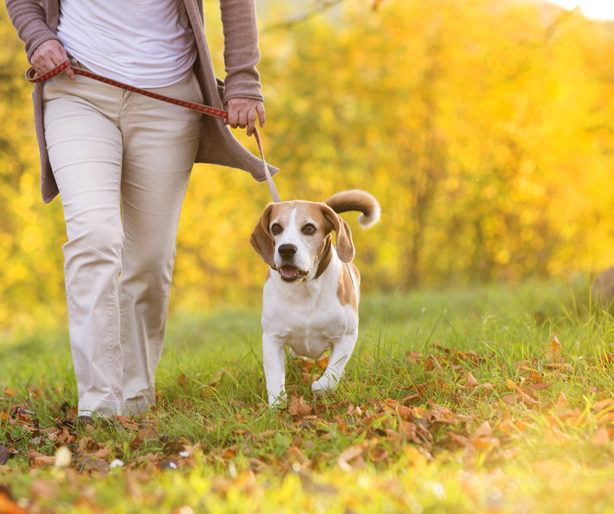 lady walking dog on leash